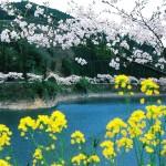 春の近隣ダム